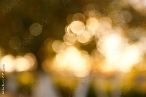 Obraz Abstract blurred nature background. Forest trees, Sunny day, sun glare, bokeh. Defocused backdrop for your design - fototapety do salonu