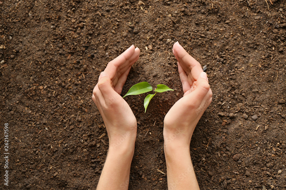 Fototapety, obrazy: Woman setting out plant in soil