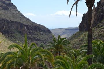 Fototapeta na wymiar Valle oasis