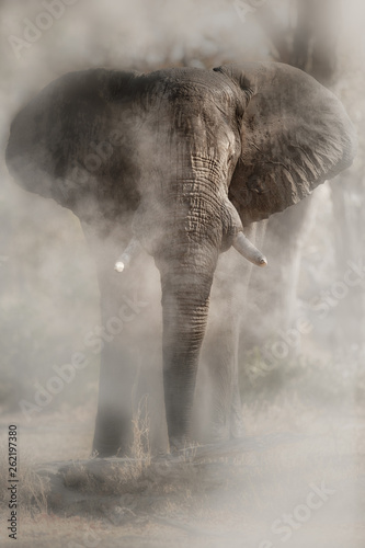 Photo sur Toile Elephant Amazing african elephant with dust. Huge elephant male in front of the camera. Wildlife scene with dangerous animal. Great tusker in the nature habitat. Loxodonta africana.