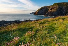 Beautiful Coastal View With Flowers ,Ceibwr Bay, Pembrokeshire, Wales
