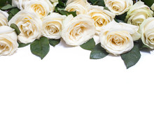 White Roses On White Background
