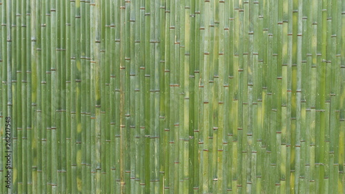竹 - Japanese fresh green bamboo wall background - Buy this