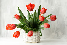 Bouquet Of Red Tulips In A Wicker Vintage Basket On A Gray Background.