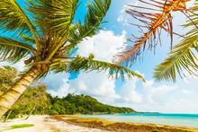 Coconut Palm Tree By The Sea I...