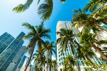 Coconut Palms And Skyscrapers ...