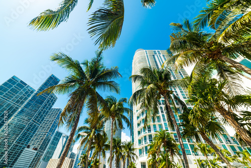 Coconut palms and skyscrapers in downtown Miami