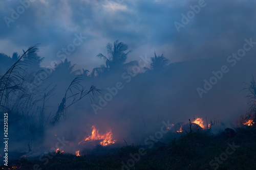 Fotografie, Tablou Forest fire at night