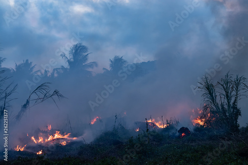 Forest fire at night Canvas Print