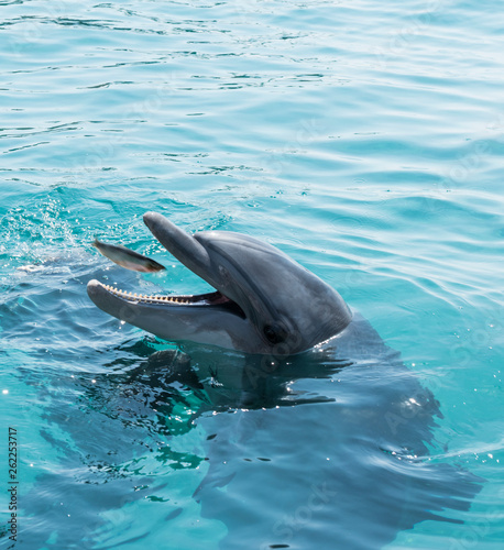 Canvas Prints Dolphin feeding the dolphins near eilat in Israel