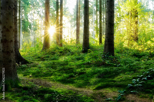 Fotografie, Obraz  Beautiful forest in spring with bright sun shining through the trees