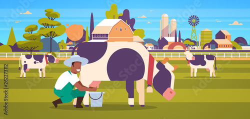 Fototapeta african american farmer milking cow in bucket farm domestic animal cattle fresh