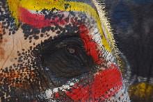 Close Up Of Elephant Eye Textu...