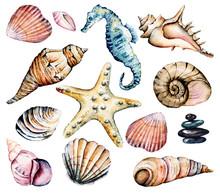 Seashells Set, Marine Scenery....