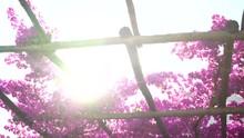 Amazing Backlit Shot Of Vibran...