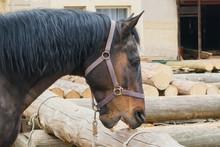 Crib Biting Horse - Animal Beh...