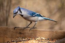 Nature Wildlife Passerine Bird...