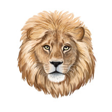 Lion Watercolor Illustration. ...