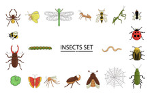 Vector Set Of Colored Insects. Collection Of Isolated On White Background Bright Bee, Bumble Bee, May-bug, Fly, Moth, Butterfly, Caterpillar, Spider, Ladybug