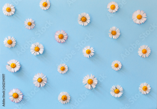 In de dag Madeliefjes Daisy's flowers pattern on pastel blue background, flat lay view
