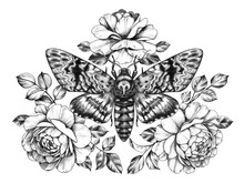 Hand Drawn Acherontia Styx Butterfly And Roses
