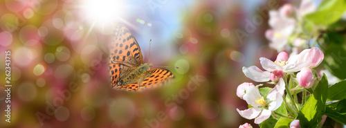 Keuken foto achterwand Eigen foto Schmetterling 548