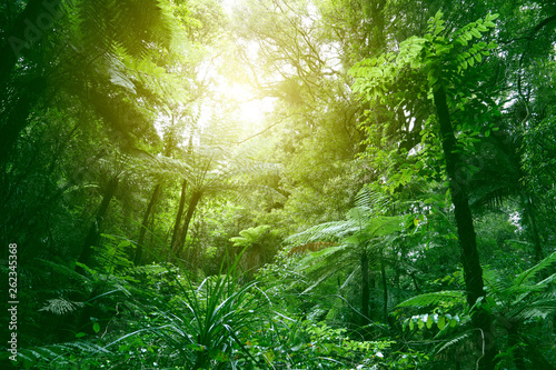 Acrylic Prints Forest Canopy of jungle