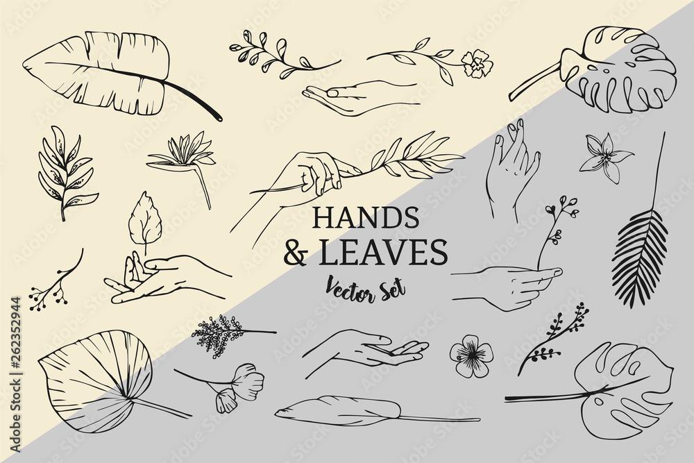 Fototapeta Vector Set of hand drawn line art plants, leaves and hands logo elements.