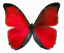 Red Butterfly Isolated On A White Background