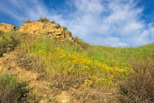 California Trail With Bright Flowers And Big Rocks