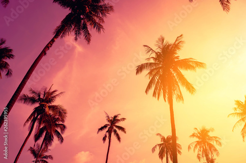 Poster de jardin Arbre Tropical palm tree with colorful bokeh sun light on sunset sky cloud abstract background.