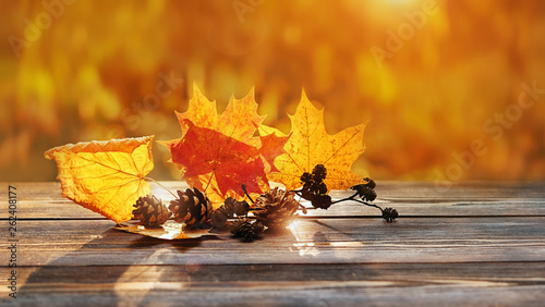 Obraz autumn leaves in sunshine. beautiful autumn composition. maple leaves and cones on rustic wood background. fall season concept. Autumn mood background. copy space, soft selective focus - fototapety do salonu
