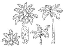 Palm Tree Set Graphic Black White Isolated Sketch Illustration Vector