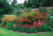 Red Flower Border With Crocosm...