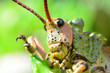 canvas print picture - Insect in south africa close up