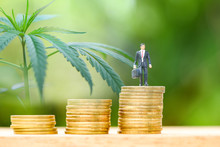 Business Cannabis Stock Leaves Marijuana Success Market Profit Growth Higher Quickly With Business Man Standing