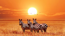 African Zebras At Beautiful Or...