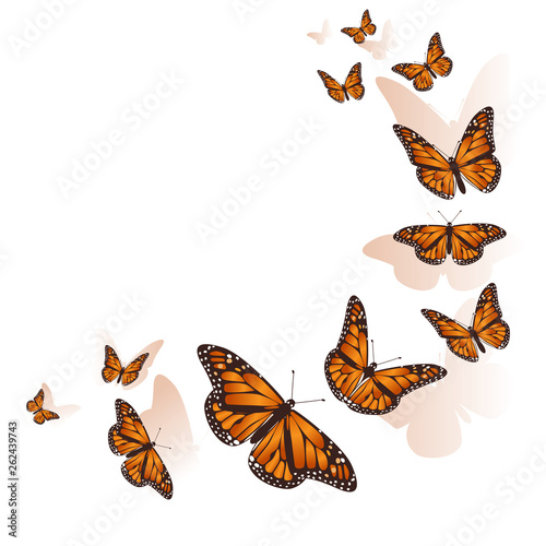 Fototapeta  Beautiful butterfly flying in a circle background. Vector.