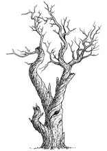 Dead Tree Illustration, Drawin...