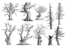 Dead Tree Collection Illustration, Drawing, Engraving, Ink, Line Art, Vector