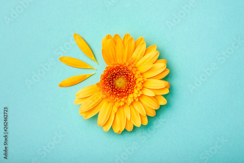 Stickers pour portes Gerbera Petal taken gerbera daisy on blue background