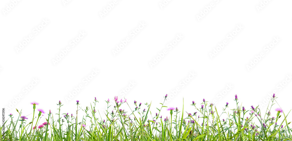Fototapety, obrazy: grass and wildflowers isolated background