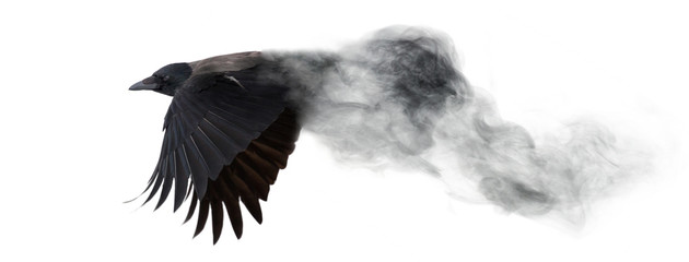 dark crow flying from smoke...