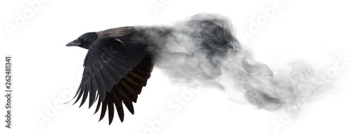 Photo dark crow flying from smoke isolated on white