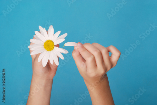 Fotografia, Obraz Loves or not loves me, plucking off the petals of a camomile.
