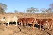 herd of horses in desert