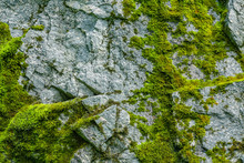 Moss On A Rock Face