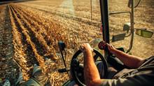 Farmer In Machine Harvesting Corn