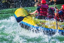 Raft  And Oak  Closeup While W...