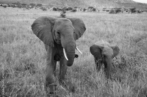 Photo  Black & White of mother and child elephant walking in Africa